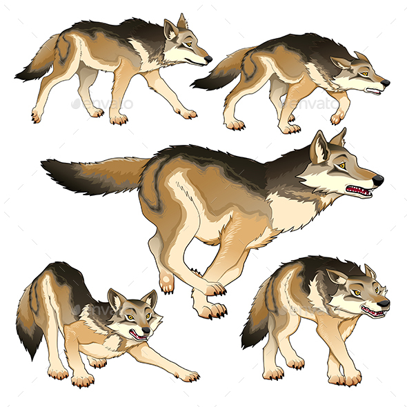 Group of Isolated Wolves - Animals Characters