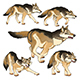 Group of Isolated Wolves - GraphicRiver Item for Sale