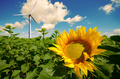 Wind turbine at Sunflower green field under cloudy summer sky