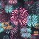 Fireworks Fantasy Loop