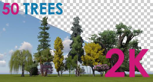 2K|Three Trees|Alpha