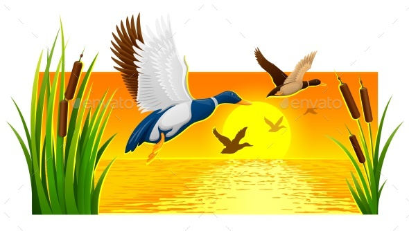 GraphicRiver Wild Ducks Soaring from Reeds on Lake 20696910