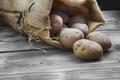 harvest potatoes - PhotoDune Item for Sale
