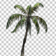 Sample Palm Tree - VideoHive Item for Sale