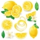 Different Lemons with Leaves and Flowers Vector - GraphicRiver Item for Sale