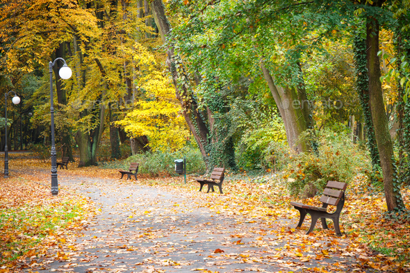 Autumnal park in october, Footpath with bench for relaxation - Stock Photo - Images