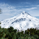 Snowy Cone of Volcano and Thickets of Evergreen Pinus Pumila Bushes - PhotoDune Item for Sale