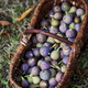 Figs in a basket - PhotoDune Item for Sale