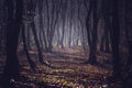 Dark forest in a misty autumn morning - PhotoDune Item for Sale