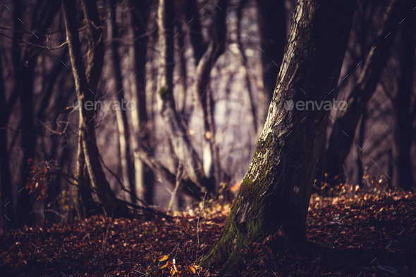 Dark forest in a misty autumn morning - Stock Photo - Images