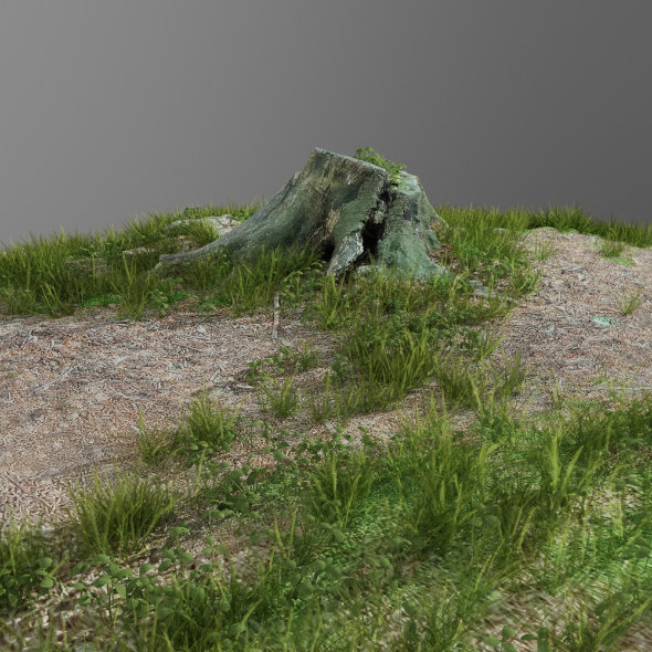 3d scanned tree stump and gras 3 - 3DOcean Item for Sale