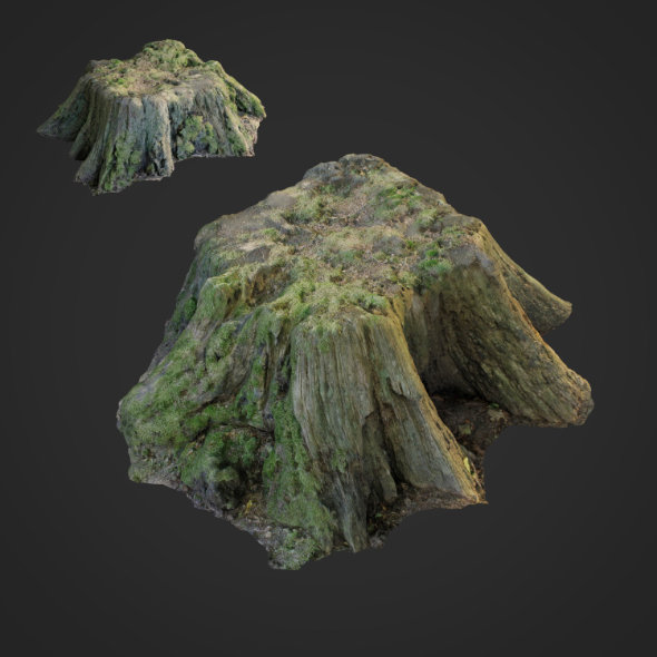 3d scanned nature tree stump 006 - 3DOcean Item for Sale