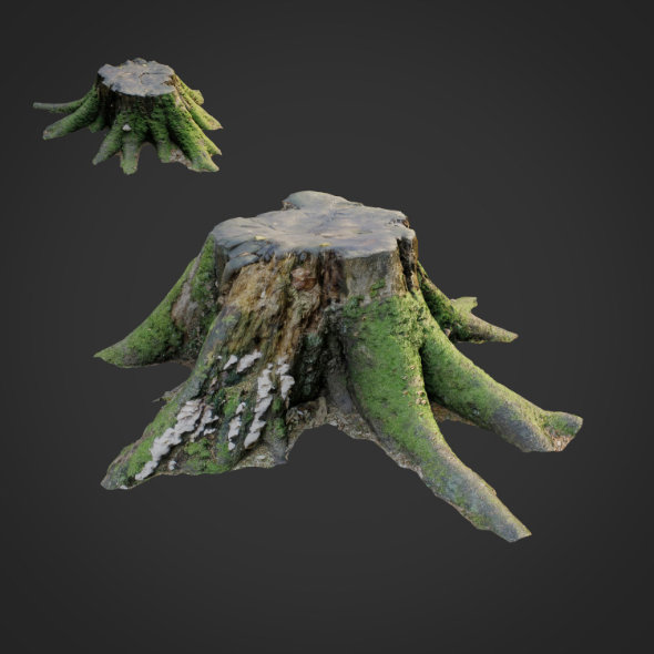 3d scanned nature tree stump 007 - 3DOcean Item for Sale