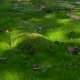 Green Moss - VideoHive Item for Sale
