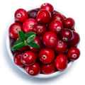 Bowl of Cranberries, top view, paths - PhotoDune Item for Sale