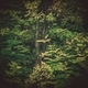 Large Tree Closeup - PhotoDune Item for Sale