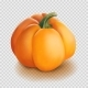 Realistic Pumpkin Isolated Vector - GraphicRiver Item for Sale
