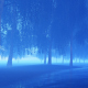Fog in the Forest - VideoHive Item for Sale