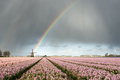 Rain and rainbow over a windmill with flowers - PhotoDune Item for Sale