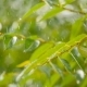 Large Drops of Rain Slowly Fall on the Green Leaves - VideoHive Item for Sale