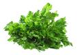 Celery Leaves - PhotoDune Item for Sale