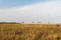 impala or antelopes grazing in savannah at africa