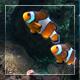 Uderwater World 3 - VideoHive Item for Sale