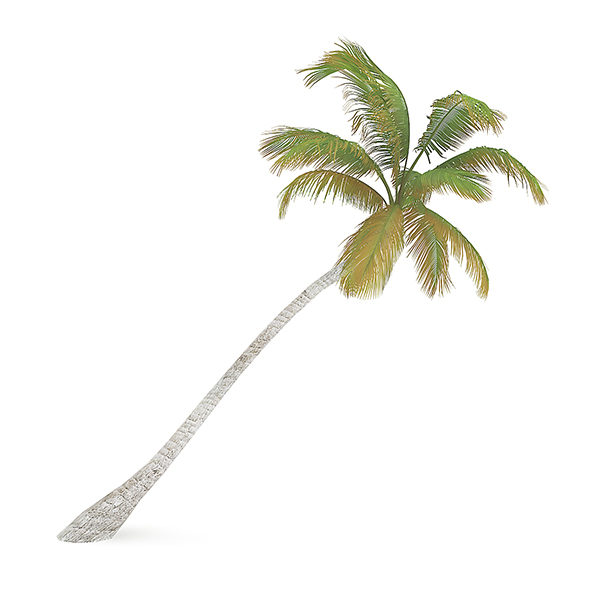 Sloping Palm Tree - 3DOcean Item for Sale