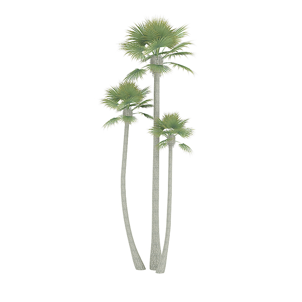 Three Palm Trees - 3DOcean Item for Sale