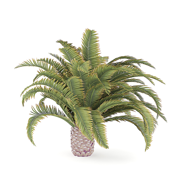 Low Palm Tree - 3DOcean Item for Sale