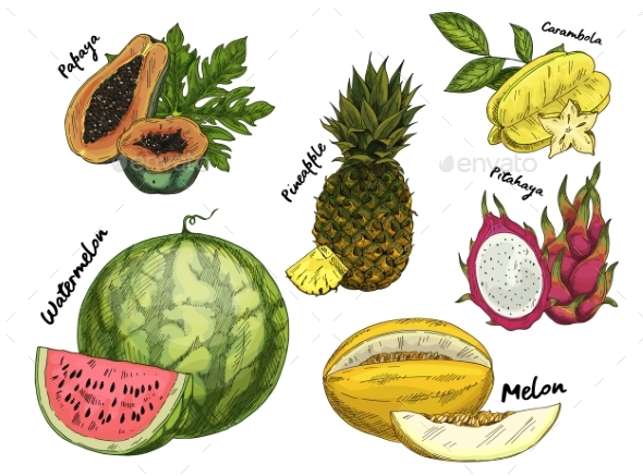 Set of Isolated Sketch of Tropical Fruits - Food Objects