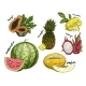 Set of Isolated Sketch of Tropical Fruits - GraphicRiver Item for Sale