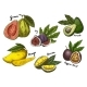 Fruit Sketches - GraphicRiver Item for Sale