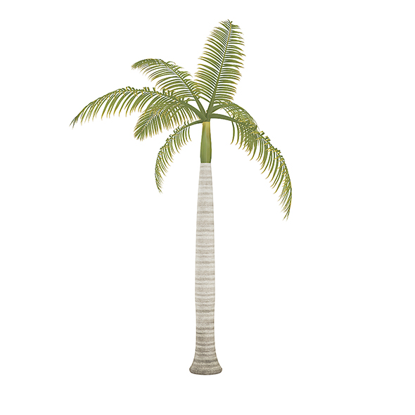 Royal Palm - 3DOcean Item for Sale