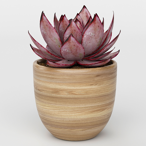3DOcean Vray Ready Potted Plant 20716098