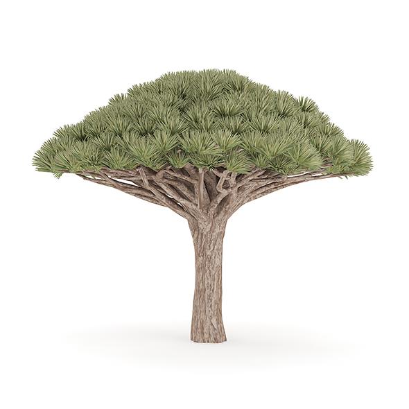 3DOcean Dragon Tree 20716299