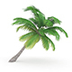 Sloping Palm Tree