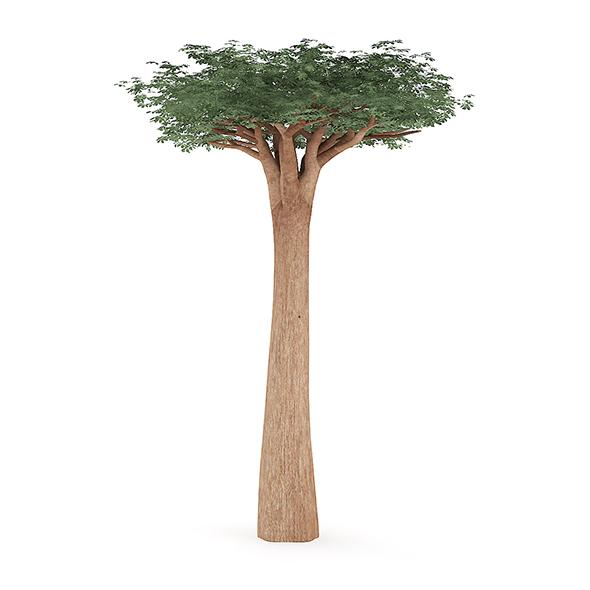 Baobab Tree - 3DOcean Item for Sale