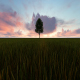 Tree and Clouds - VideoHive Item for Sale