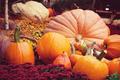 Pumpkin - PhotoDune Item for Sale
