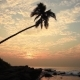 Lonely Palm Tree on the Beach at Sunset - VideoHive Item for Sale