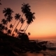 Sandy Beach with Palm Trees at Sunset - VideoHive Item for Sale