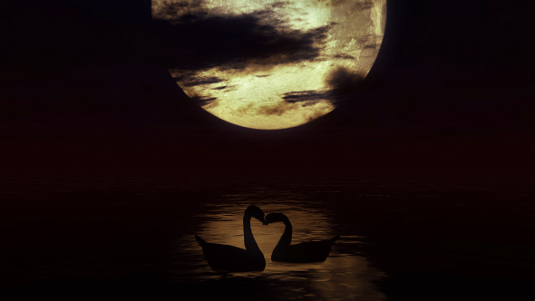 Swans By Moonlight >> Two Swans In The Water Against The Background Of A Big Moon 2 By