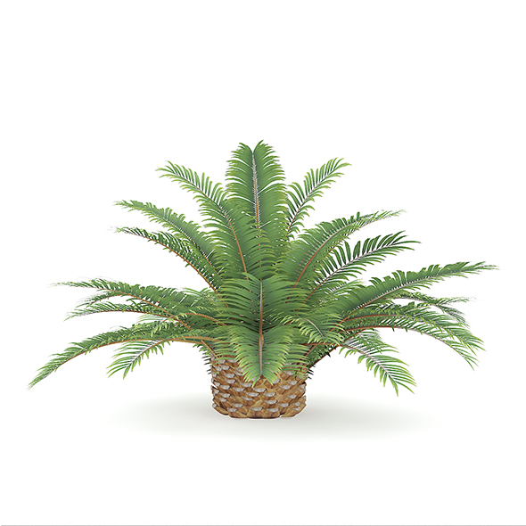 Queen Sago Plant - 3DOcean Item for Sale