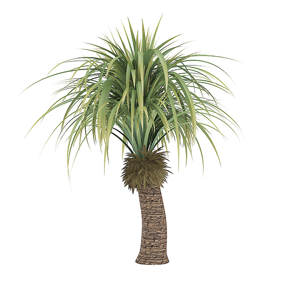 Small Palm Tree - 3DOcean Item for Sale