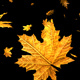 Leaves Falling - VideoHive Item for Sale