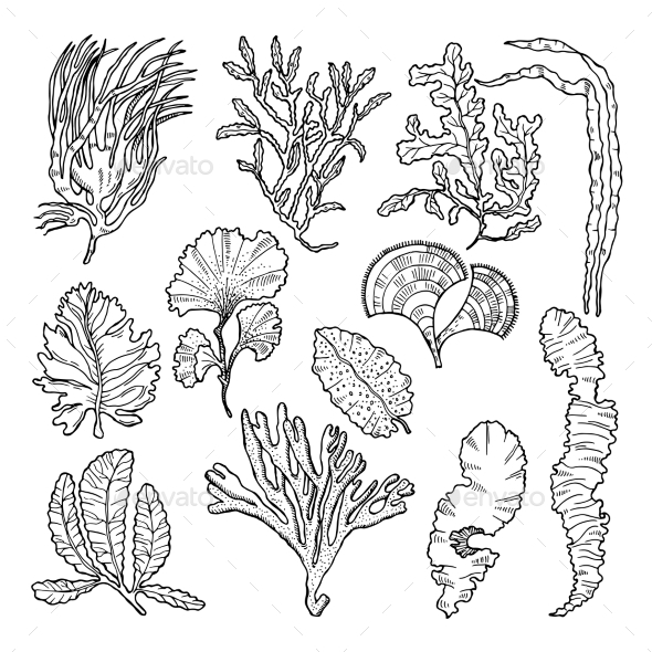 Marine Sketch with Different Underwater Plants - Organic Objects Objects