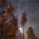 Fall Night Sky Forest - VideoHive Item for Sale