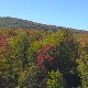 Vermont fall forest - VideoHive Item for Sale