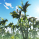 Tropical Forest and Sun - VideoHive Item for Sale